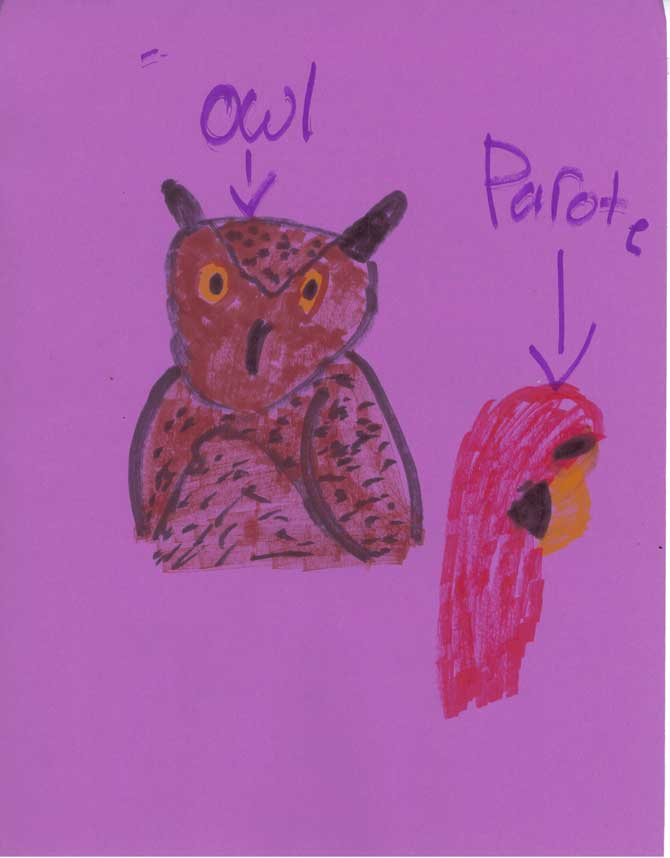 The back of a letter to Carolyn from Samantha. A drawing of an owl and a parrot.