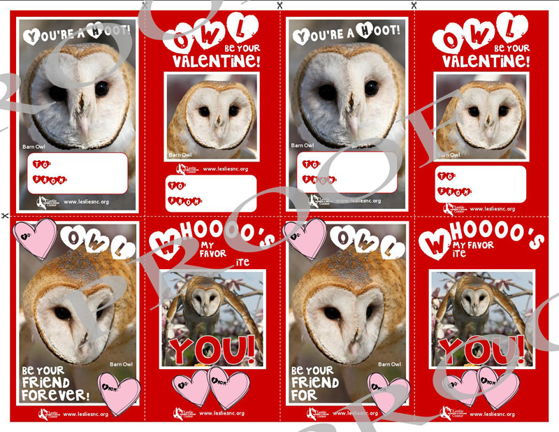 Eight Valentines Day Cards Featuring Photos Of Our Barn Owl And Lots Of Red  And Pink