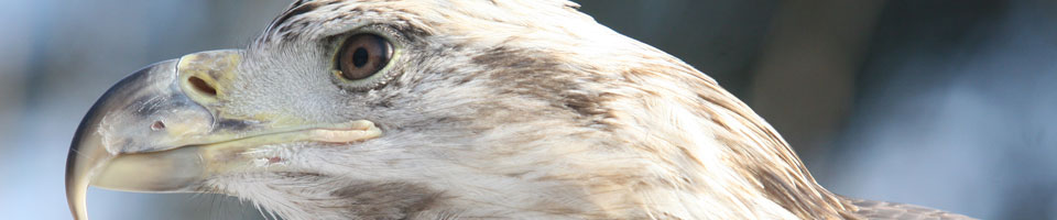 the head of an eagle, in profile against an undifferentiated blue background.